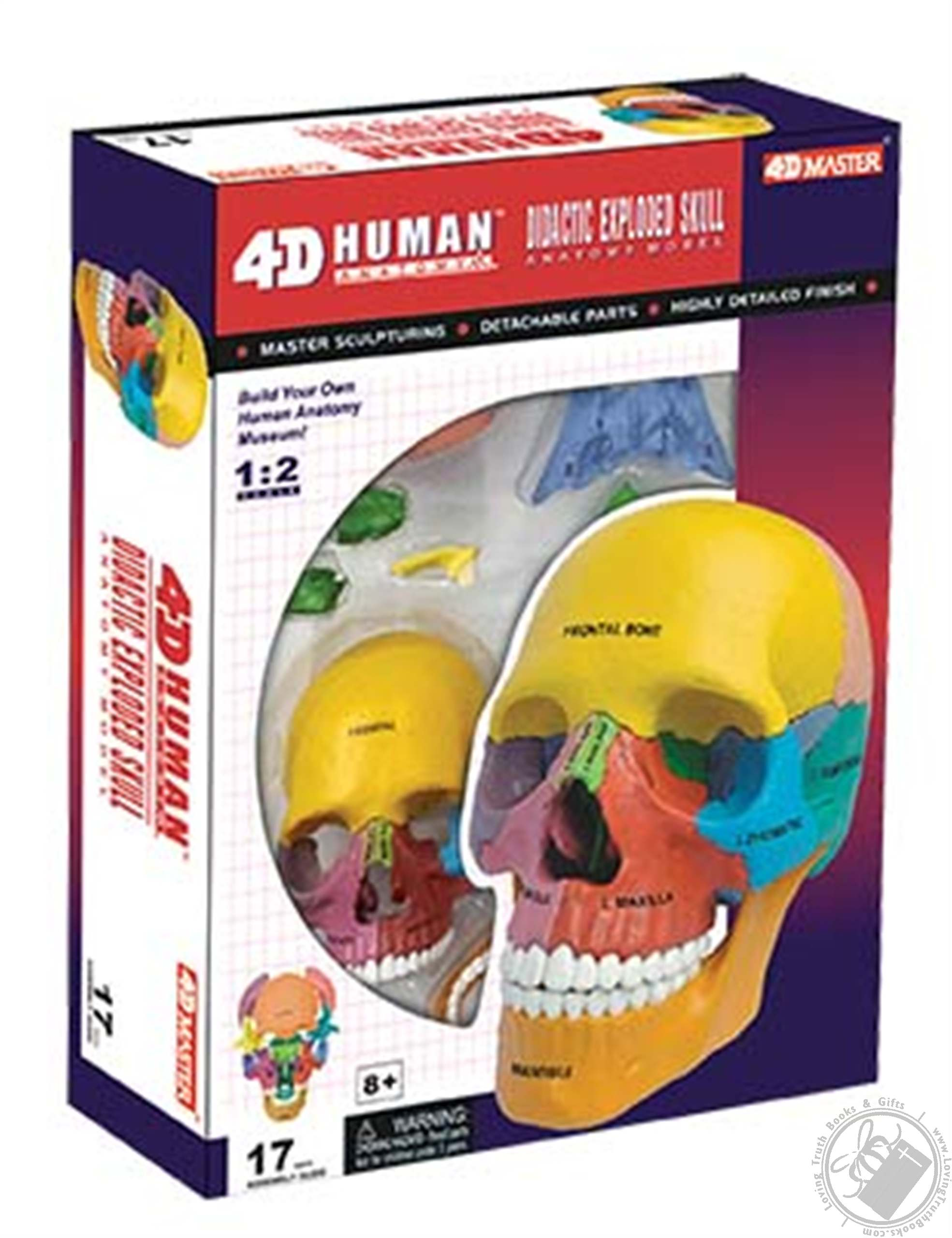4d Human Anatomy Didactic Exploded Skull Model 17 Pieces For Ages 8